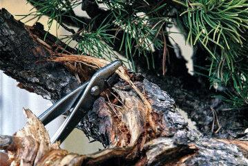 legno secco bonsai