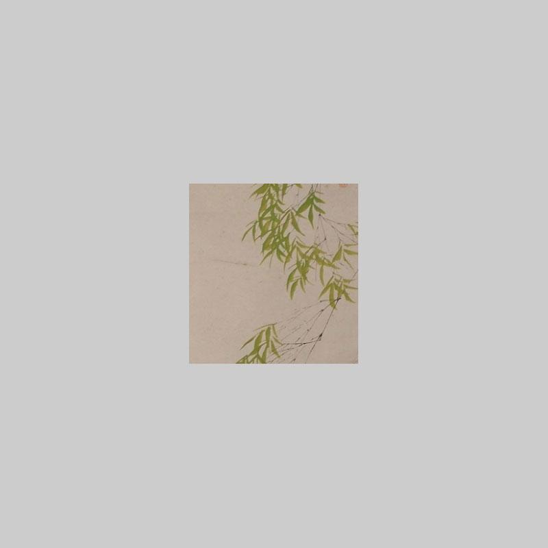 particolare foglie rotolo bambu giapponese