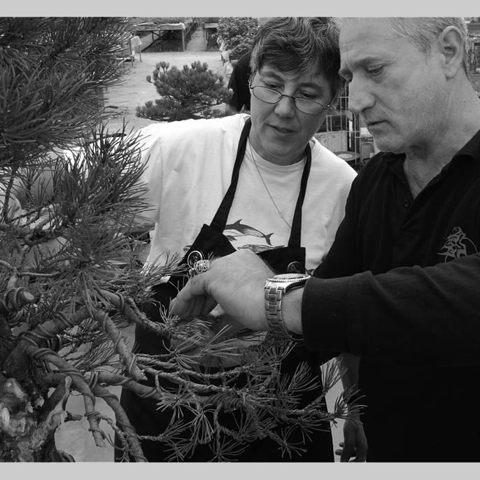 Lezioni individuali di 1 ora bonsaicreativo sandro segneri