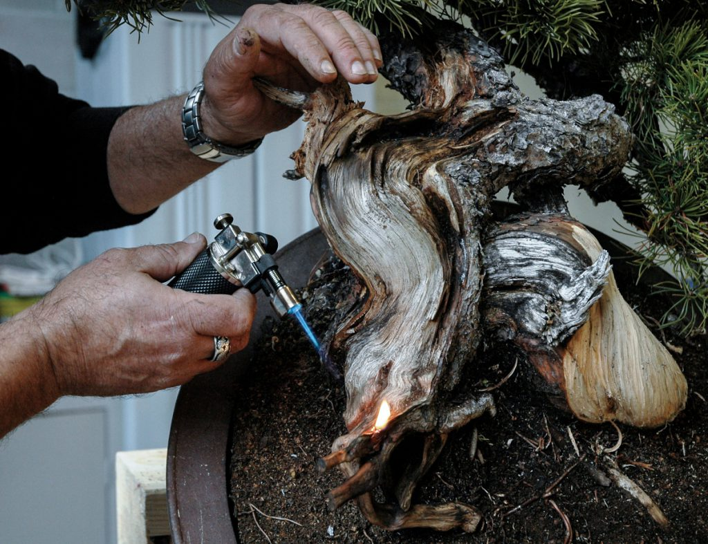 fiamma legno bonsai