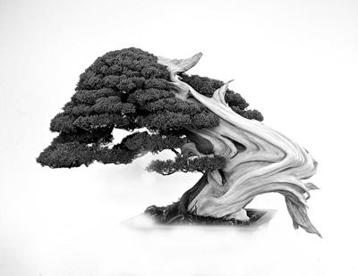 bonsai_bcsa