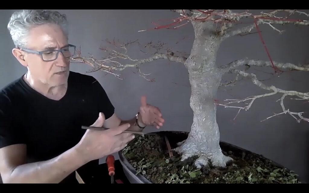 rinvaso acero bonsai