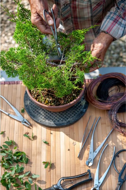 potatura bonsai attrezzi