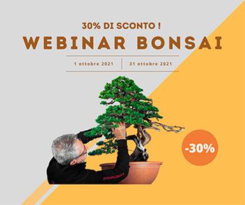 promozione bonsai creativo ottobre